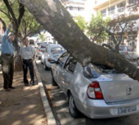 curiozzzo.com-12-vezes-em-que-arvores-cairam-sobre-carros-pelo-rn-08