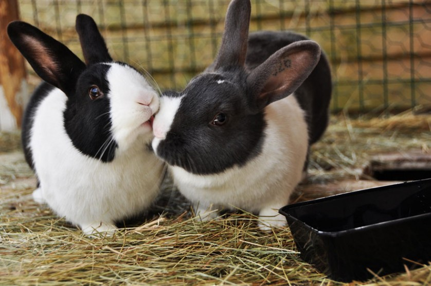 homem-de-69-filhos-coelho