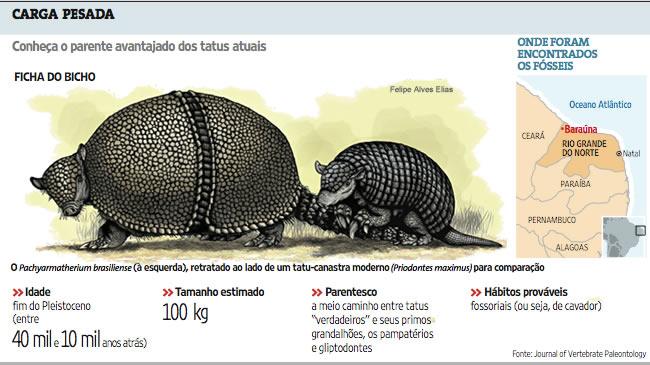 post-curiosidades-museu-camara-cascudo-ufrn-mcc-barauna-tatu-gigante