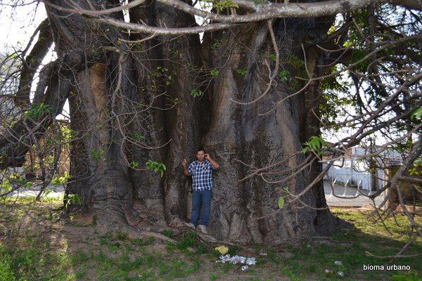 post-origem-significado-nome-bairro-arvore-baoba-poeta-lagoa-seca