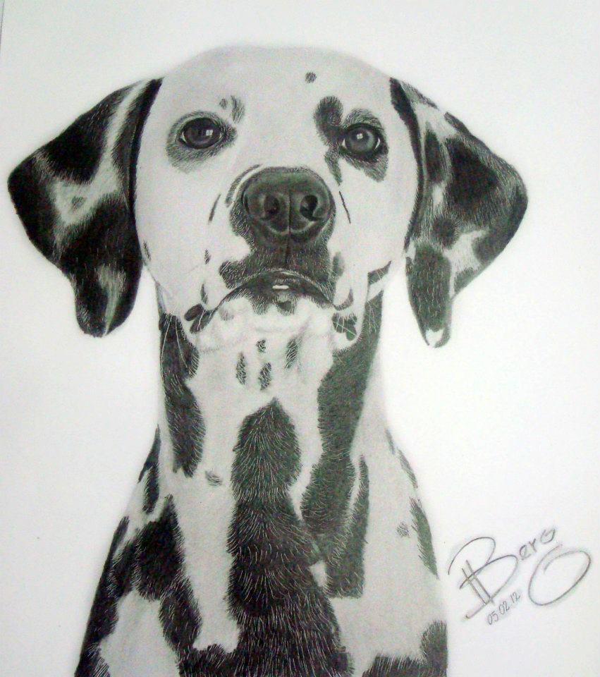 post-10-desenhos-caricaturas-realistas-artista-mossoroense-cachorro-dalmata